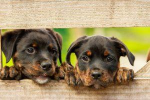asigurare sănătate câine